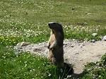 Marmotte 14 Larche 046
