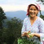Darjeeling-300x224