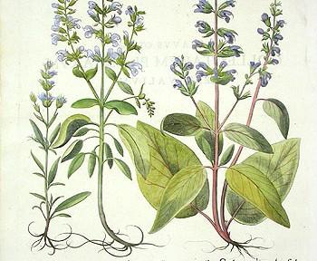 les graines de chia : une source végétale d'oméga 3