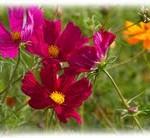 fonds d'écran fleurs