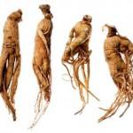 ginseng-racines