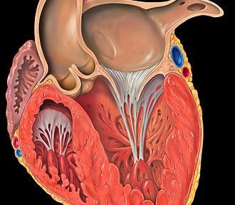 C'est l'homocystéine qui altère vos vaisseaux sanguins !