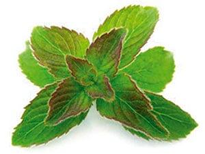 L'huile de Périlla: un anti allergique très performant !