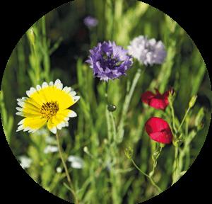 Les principes de bases de la naturopathie