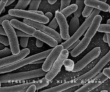 Dysbiose intestinale : toute une histoire…(2ème partie)