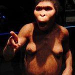 220px-Lucy_Australopithecus_Restoration_model