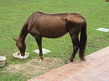 220px-This_Horse_is_in_Terrible_Shape