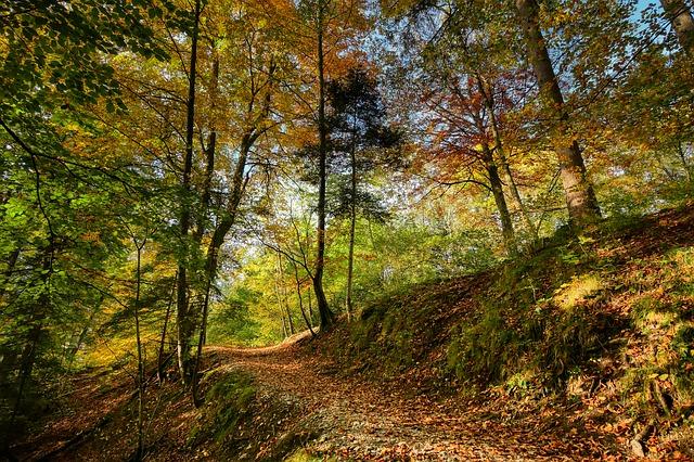 Immunité : appuyez sur le champignon en automne