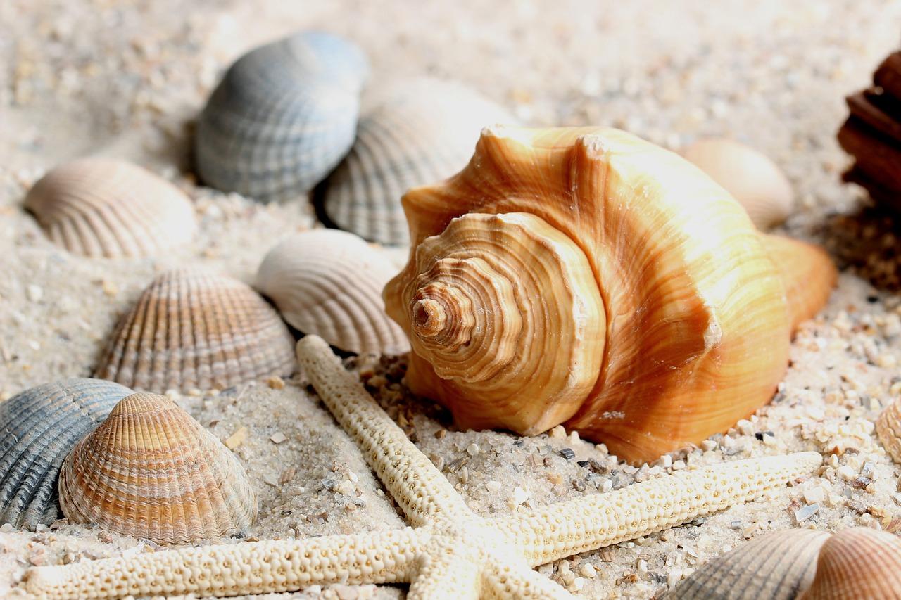 Fruits de mer: la santé dans l'assiette pour la fin de l'année.