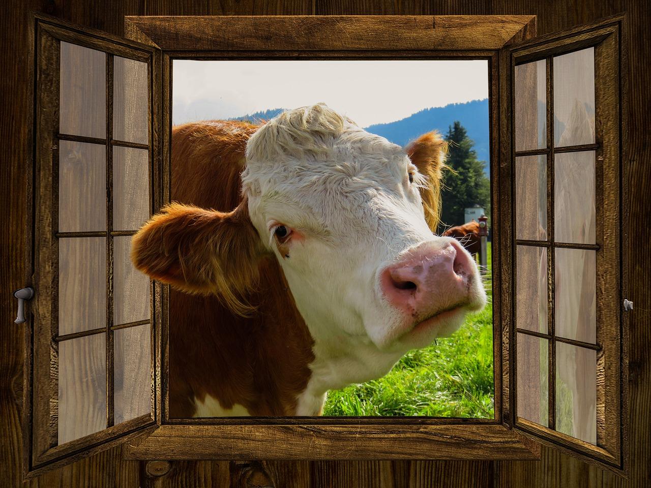 Bientôt une taxe sur la viande ?