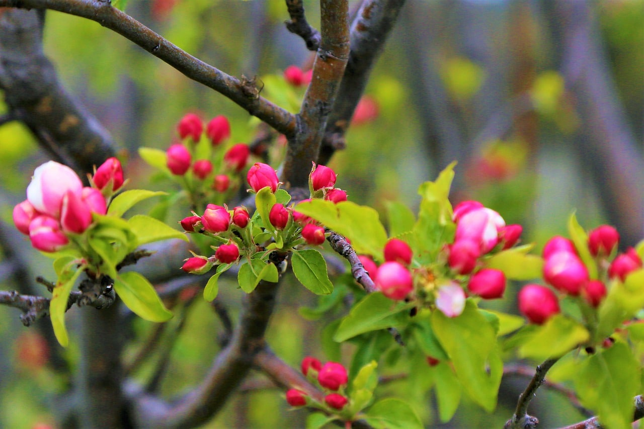 Accueillons ce printemps