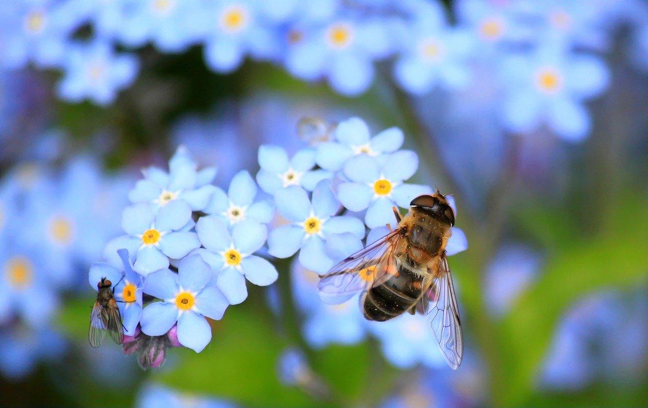 Savez-vous qu'on peut se protéger des virus et bactéries en prenant exemple sur les abeilles ?